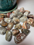 Crazy Lace Agate (Tumbled)