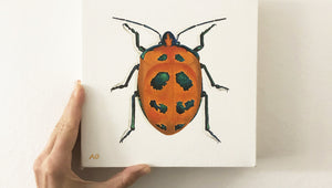 Cotton Harlequin Beetle