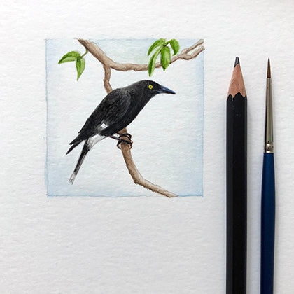 Miniature Currawong watercolour painting by Amanda Gosse