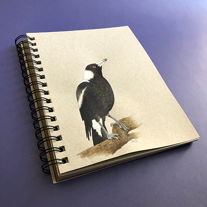 Australian Magpie Watercolour Sketch by Amanda Gosse