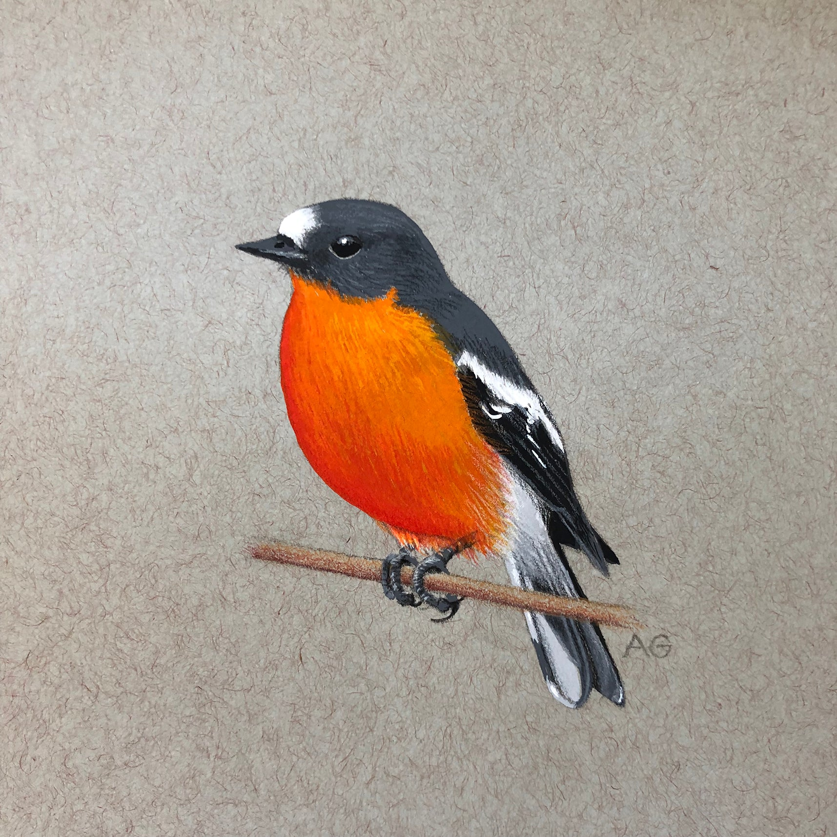 Original Painting of a Flame Robin Watercolour and Gouache by Amanda Gosse