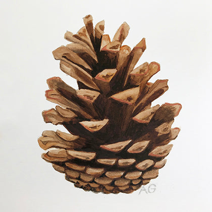 Original Watercolour painting of a pine cone by Amanda Gosse
