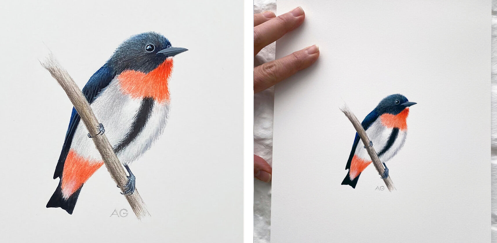 Original painting of an Australian Mistletoebird