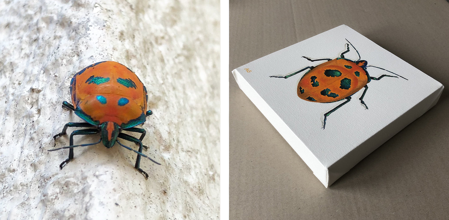 Cotton Harlequin Beetle Original Acrylic Painting by Amanda Gosse