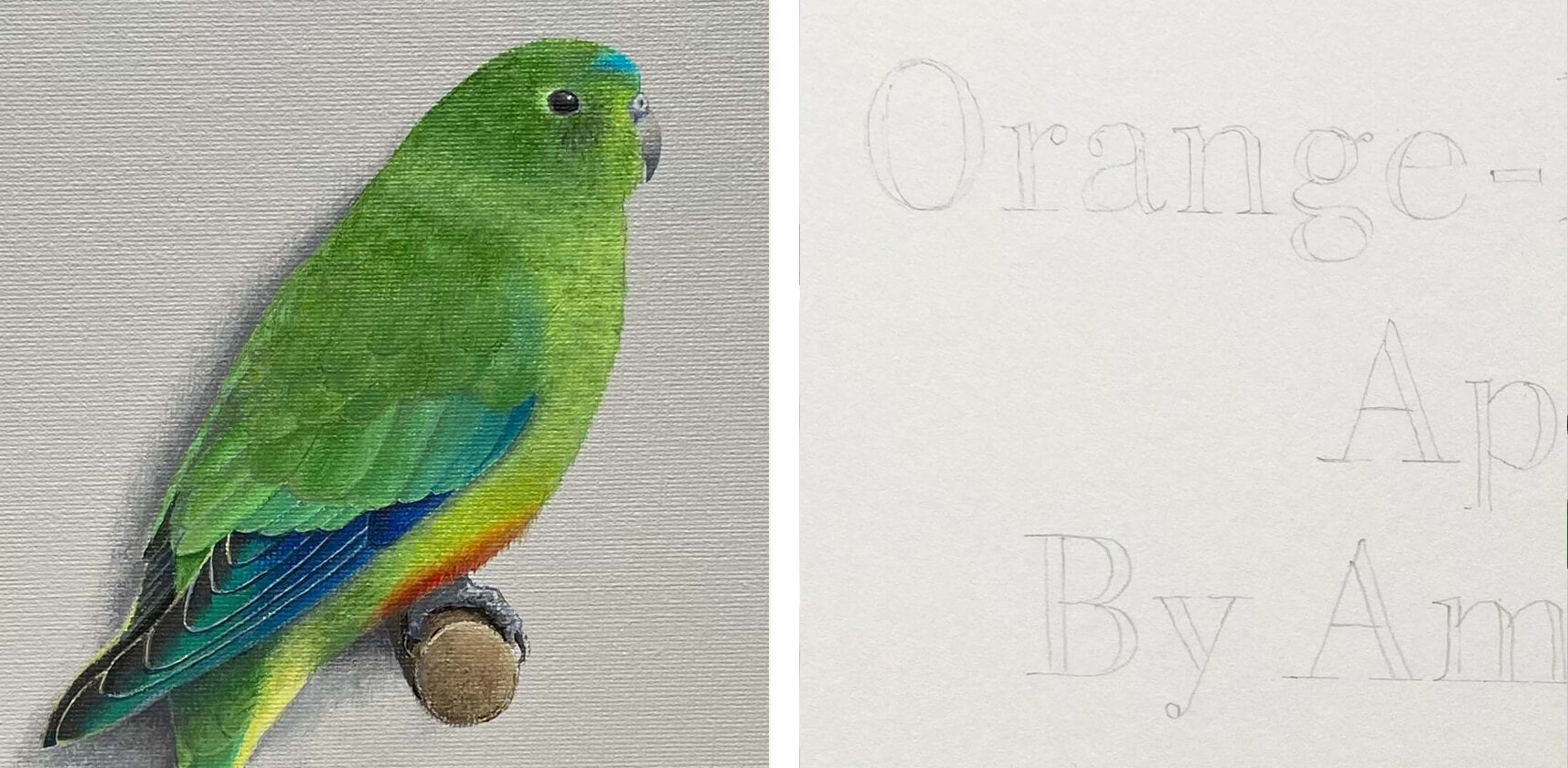 Orange-bellied parrot and hand lettering by Amanda Gosse
