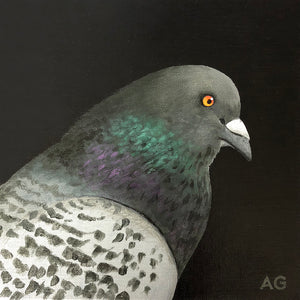 Pigeon | Acrylic on Canvas Panel | 20 x 20cm