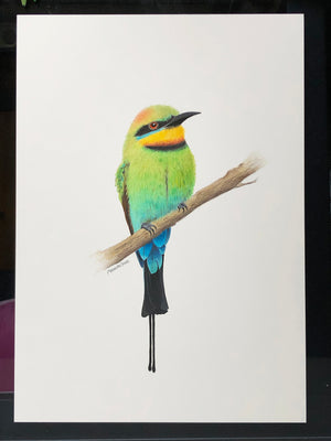 Rainbow bee-eater original artwork by Amanda Gosse