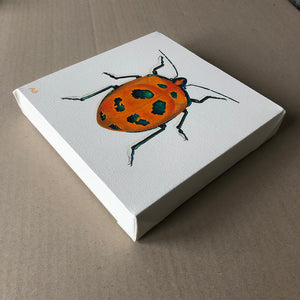 Cotton harlequin beetle original painting
