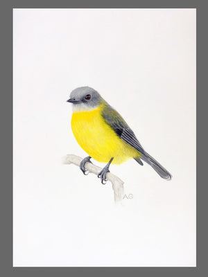Eastern Yellow Robin Original Gouache Painting by Amanda Gosse