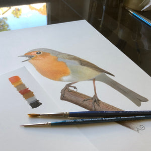 European robin original pencil and gouache painting by Amanda Gosse