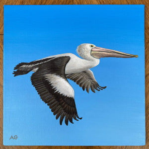 Pelican in flight painting by Amanda Gosse. Original acrylic artwork on canvas panel.
