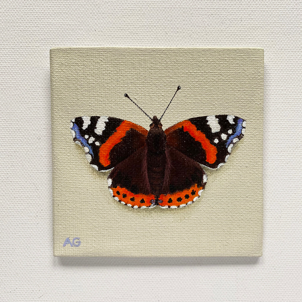 Red Admiral Butterfly miniature painting in acrylic on 10 x 10cm canvas by Amanda Gosse