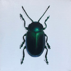Green jewel beetle original acrylic painting by artist Amanda Gosse