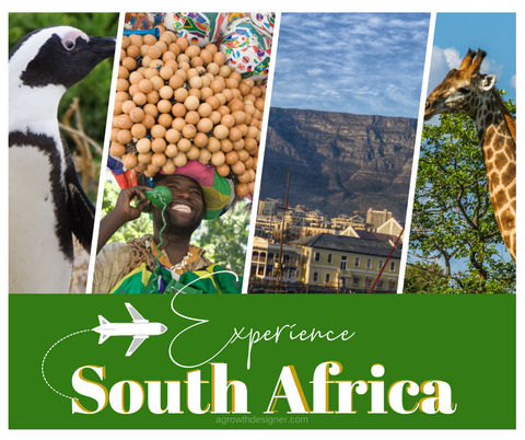 Experience South Africa