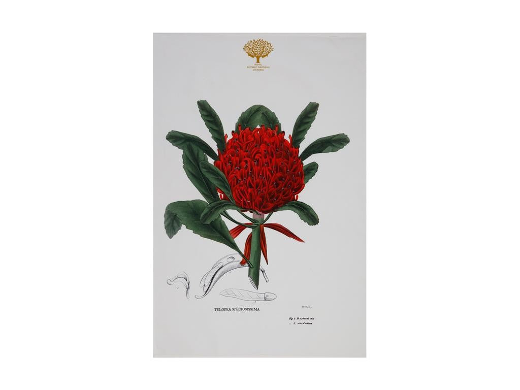 Maxwell & Williams Royal Botanic Garden Tea Towel 50x70cm Telopea - ZoeKitchen