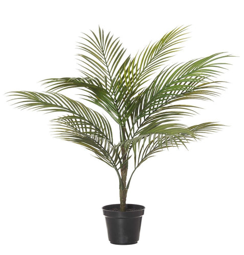 Rogue Areca Palm Tree Green 50x50x65cm - ZOES Kitchen
