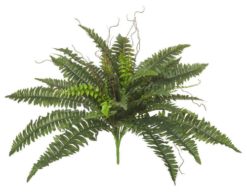 Rogue Wild Boston Fern Green 76x76x50cm - ZOES Kitchen