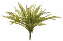 Load image into Gallery viewer, Rogue Boston Fern Green 50x50x50cm - ZOES Kitchen