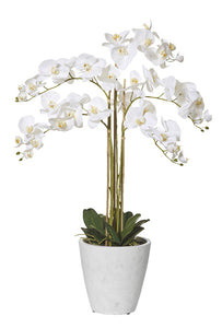 Rogue Butterfly Orchid Tall Pot 105cm Wht - ZOES Kitchen