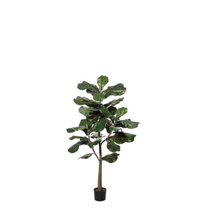 Rogue Fiddle Tree 152cm Green