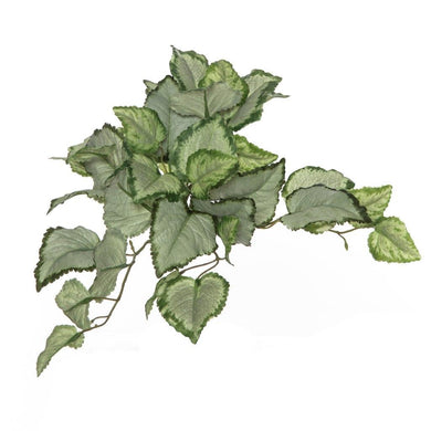 Rogue Lamium Bush 25cm Variegated