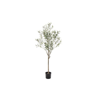 Rogue Olive Tree 150cm Grey Green