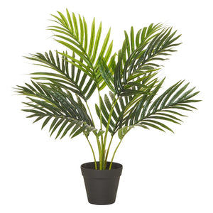 Rogue Areca Palm Green in Garden Pot 50x50x55cm - ZOES Kitchen