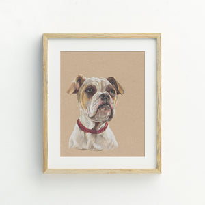 Adaline the American Bulldog Print