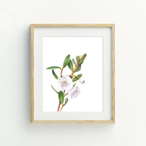 Leatherwood Flower Print