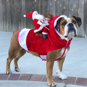 Santa Christmas Dog Costume