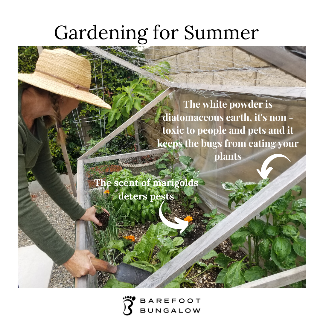 Gardening in June: What to plant and what's in season