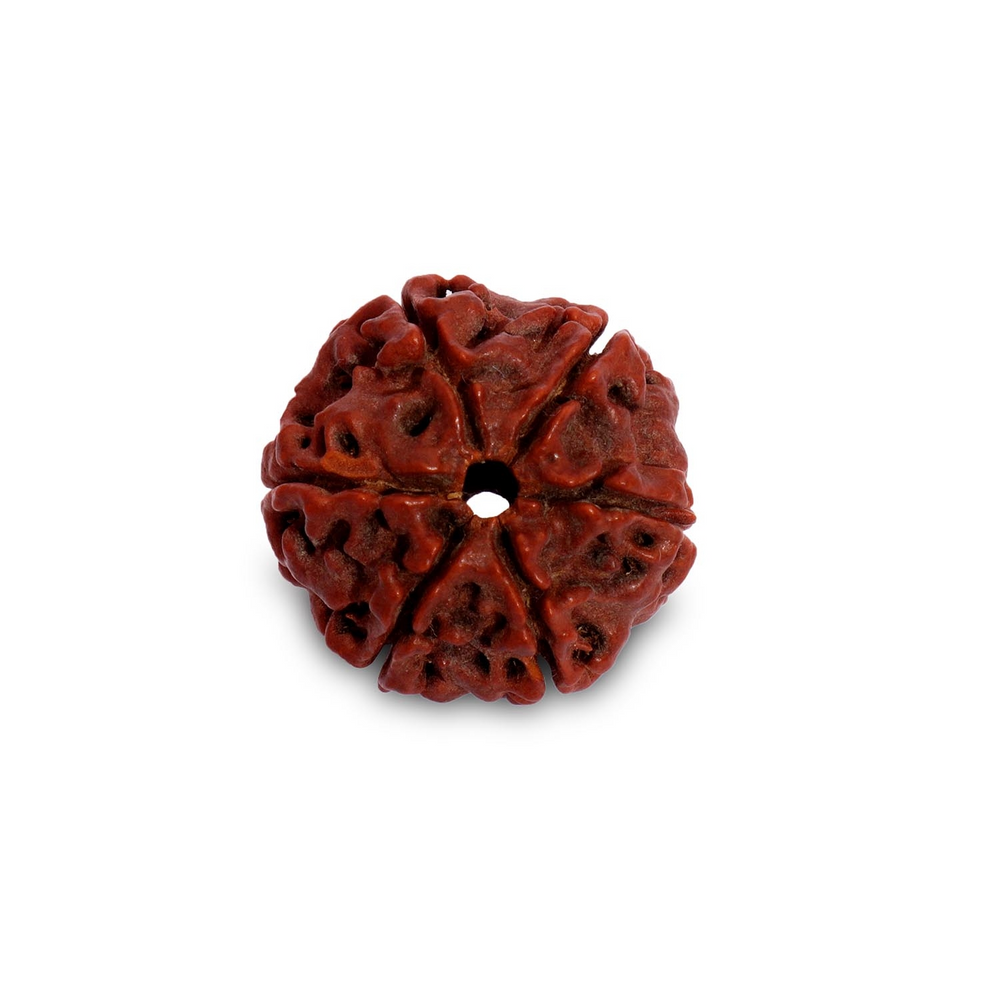 Shanmukhi Rudraksha Bead for Children (Six Faced)
