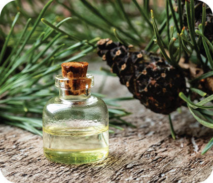 Pinene terpenes with small essential oil bottle.