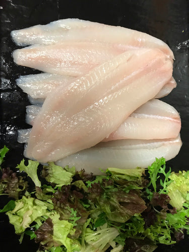 5 Large Fresh Haddock Fillets