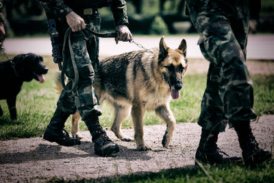 Dogs in Warfare: Essential Military Dog Gear You Need