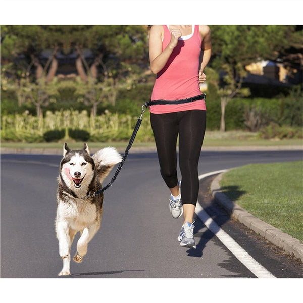 Hands Free Running Dog Lead - Yosif Store