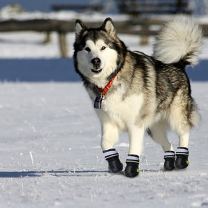 Protective Dog Shoes Waterproof Non-slip 🐺 🚵