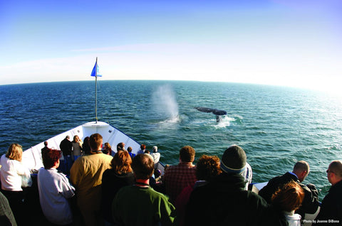 Hornblower Cruises & Events Tickets