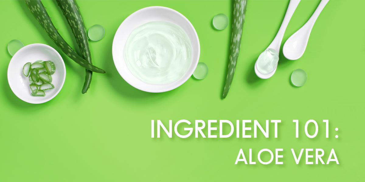 Asian Skincare Ingredient 101: Aloe & Aloe vera