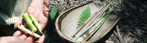 The bamboo used by 23.5N is naturally farmed from Zhushan Township in Nantou County, Taiwan.