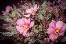 Afbeelding in Gallery-weergave laden, PTMD - Garden Flower pink fall cosmos fern leaf bush