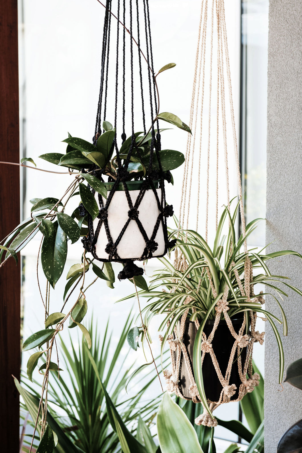 Our macrame plant hangers are designed to display your indoor plants with unique flair. flower plant hanger. jute plant hanger. macrame plant hanger. hanging plants. black plant hanger.