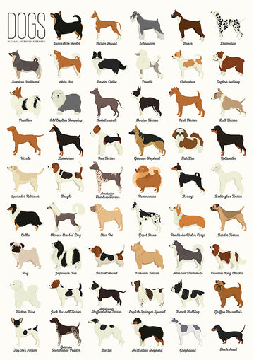 Dog Breeds - Art Print
