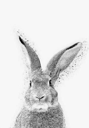 Rabbit - Art Print