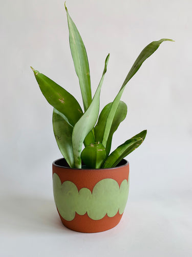 Green Cloud Planter