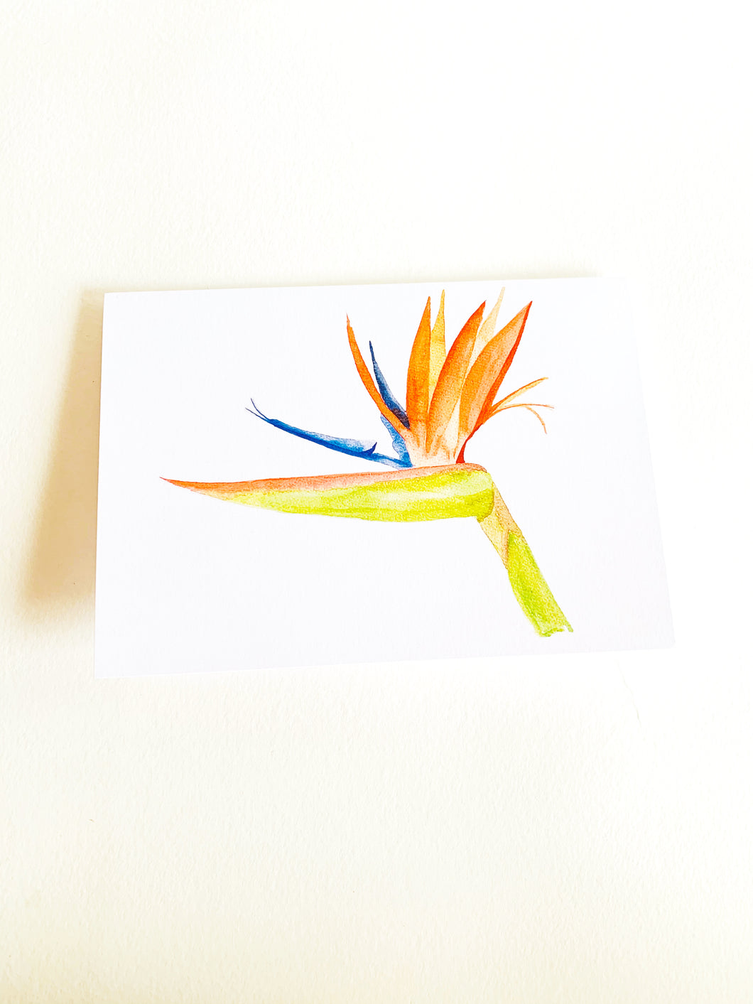 Bird of Paradise Notecard