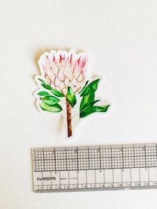 Protea sticker