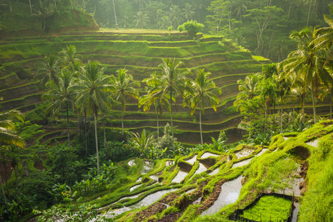 Layered hill of grass in Bali