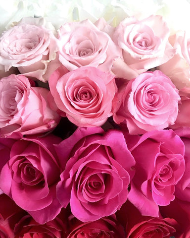 White, light pink, and dark pink roses