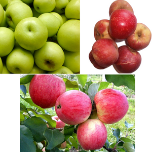 Apple TRIO (Melba, Astrahan, Early Gold)